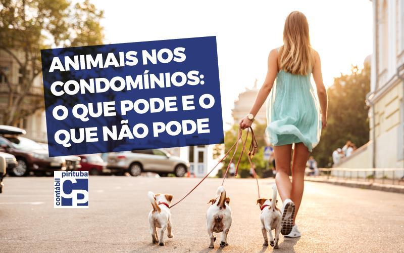 Animais Nos Condomínios: O Que Pode E O Que Não Pode